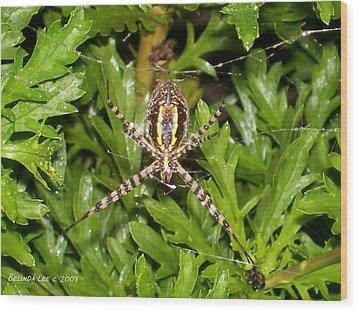 Spider Making Web Wood Print by Belinda Lee