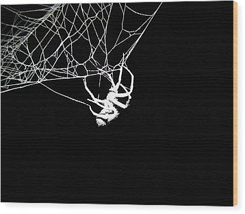 Spider Wood Print by Natasha Denger