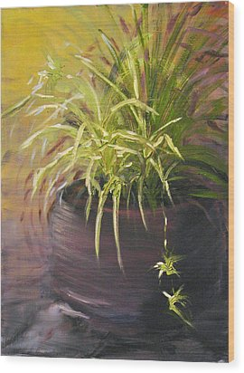 Spider Plant Wood Print by Sherry Robinson