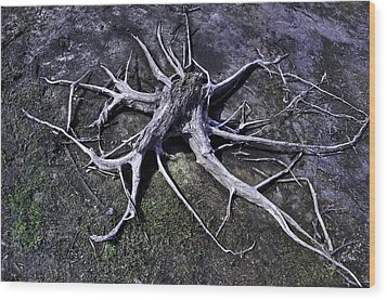 Spider Roots At Manasquan Reservoir Wood Print by Gary Slawsky