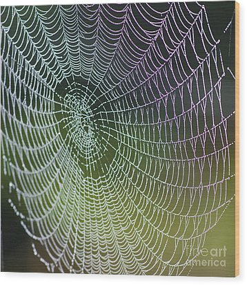 Spider Web Wood Print by Heiko Koehrer-Wagner