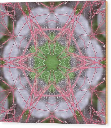Spider Web On Smokebush Wood Print by Trina Stephenson