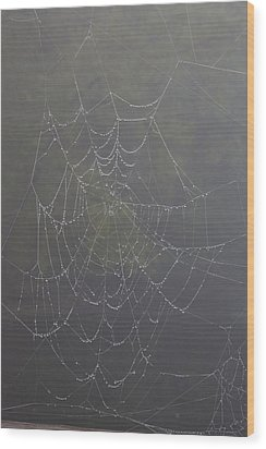 Spiderweb Wood Print by Allan Morrison