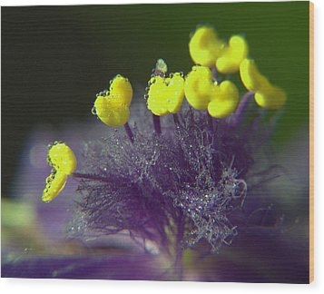 Wood Print featuring the photograph Spiderwort Bubbles by Suzy Piatt