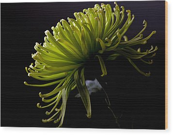 Wood Print featuring the photograph Spike by Sennie Pierson