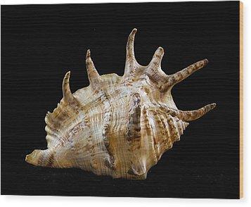 Spikes Back Side Wood Print by Jean Noren