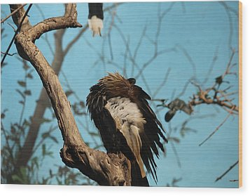 Spiky Bird Wood Print