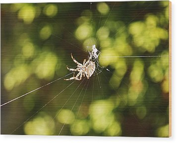 Wood Print featuring the photograph Spins A Web by Al Fritz