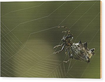 Wood Print featuring the photograph Spiny Backed Orb Weaver by Tom Cameron