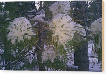 Spiny Snow Balls Wood Print by Chris Tarpening