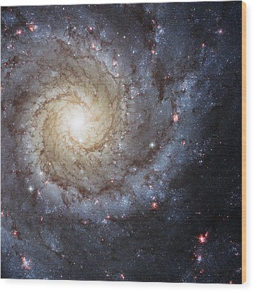 Spiral Galaxy M74 Wood Print by Adam Romanowicz