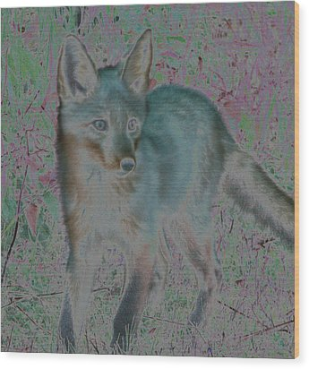 Wood Print featuring the photograph Spirit Fox by Aurora Levins Morales