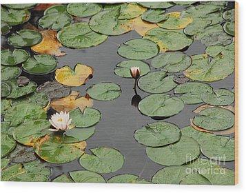 Spirit Lake Lillies Wood Print