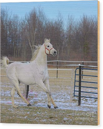 Spirited Horse Wood Print by Kathleen Struckle