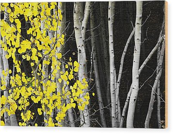Splash Of Gold Wood Print by The Forests Edge Photography - Diane Sandoval