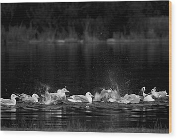 Wood Print featuring the photograph Splashing Seagulls by Yulia Kazansky
