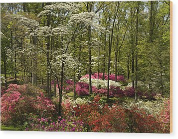 Splendor - Azalea Garden Wood Print by Jane Eleanor Nicholas