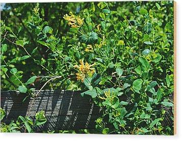 Split Rail Honeysuckle Wood Print