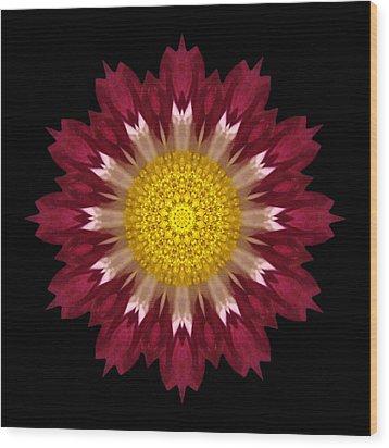Spoon Chrysanthemum I Flower Mandala Wood Print by David J Bookbinder