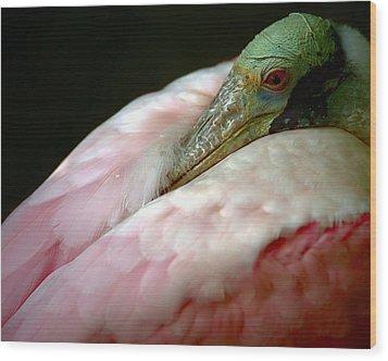 Spoonbill At Rest Wood Print