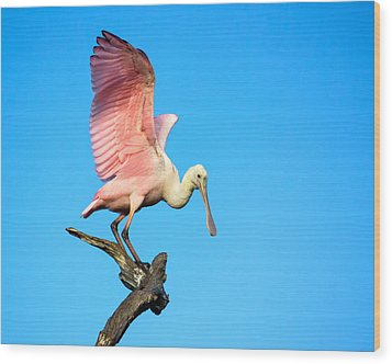Spoonbill Flight Wood Print by Mark Andrew Thomas