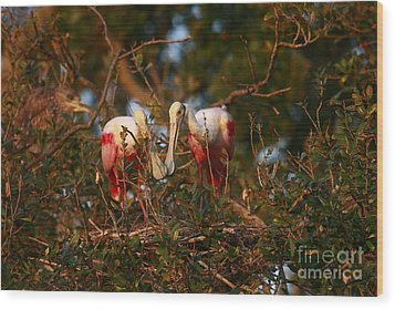 Wood Print featuring the photograph Spoonbill Love Nest by John F Tsumas