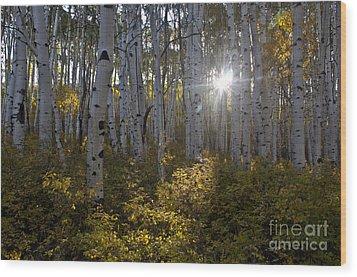 Spot Of Sun Wood Print by Jeffrey Kolker