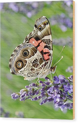 Spotted Butterfly Wood Print by Kim Bemis
