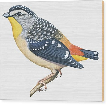 Spotted Diamondbird Wood Print by Anonymous