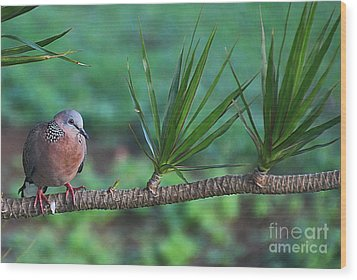 Spotted Dove Wood Print by Elizabeth Winter