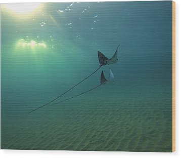 Spotted Eagle Rays During Sunset Wood Print by Brad Scott