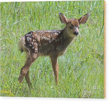 Spotted Fawn  Wood Print by Michele Penner