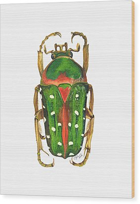Spotted Flour Beetle Wood Print by Cindy Hitchcock