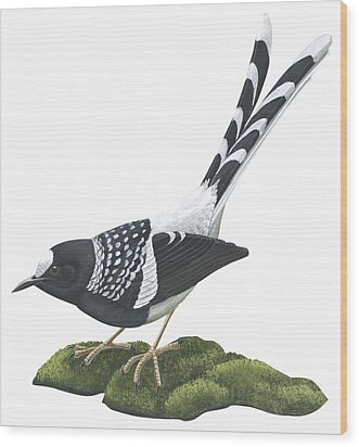 Spotted Forktail Wood Print by Anonymous