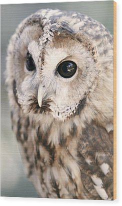 Wood Print featuring the photograph Spotted Owl by Shoal Hollingsworth
