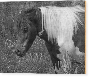Spotted Pony Wood Print by Joyce  Wasser