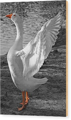 Spread Your Wings B And W Wood Print by Lisa Phillips