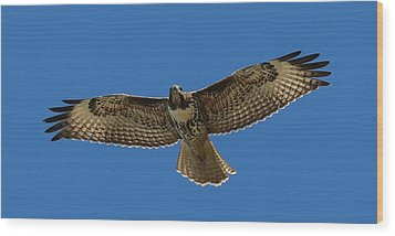 Wood Print featuring the photograph Spread Your Wings  by Christy Pooschke