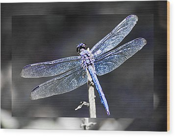 Wood Print featuring the digital art Spreading Her Wings by Linda Segerson