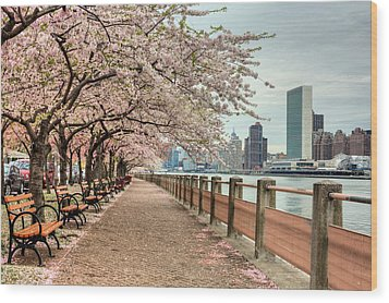 Spring Along The East River Wood Print by JC Findley