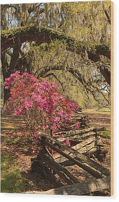 Wood Print featuring the photograph Spring Beauty by Patricia Schaefer