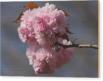 Spring Beauty Wood Print by Vadim Levin