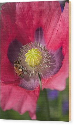 Spring Bees Wood Print by Bonita Hensley