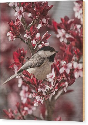 Spring Blossom Chickadee Wood Print by Lara Ellis