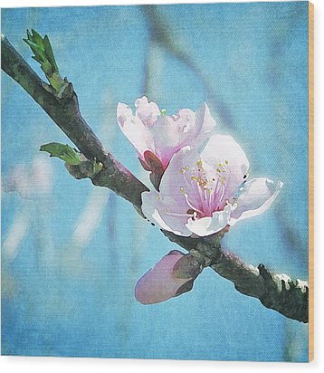 Spring Blossom Wood Print by Jocelyn Friis
