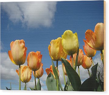 Spring Blue Sky White Clouds Orange Tulip Flowers Wood Print by Baslee Troutman
