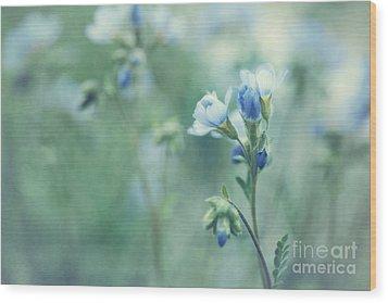 Spring Blues Wood Print by Priska Wettstein