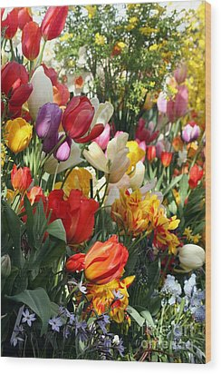 Wood Print featuring the photograph Spring Bulb Bonanza by Mary Lou Chmura