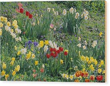 Spring Bulb Garden Wood Print by Alan L Graham