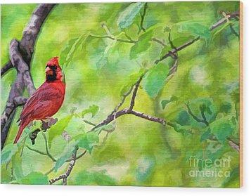 Spring Cardinal Wood Print by Darren Fisher